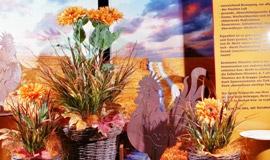 Herbst - Dekorationen